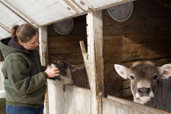 Sarah Gilbert checks on one of the calves on her dairy farm in Hardin County, Iowa.