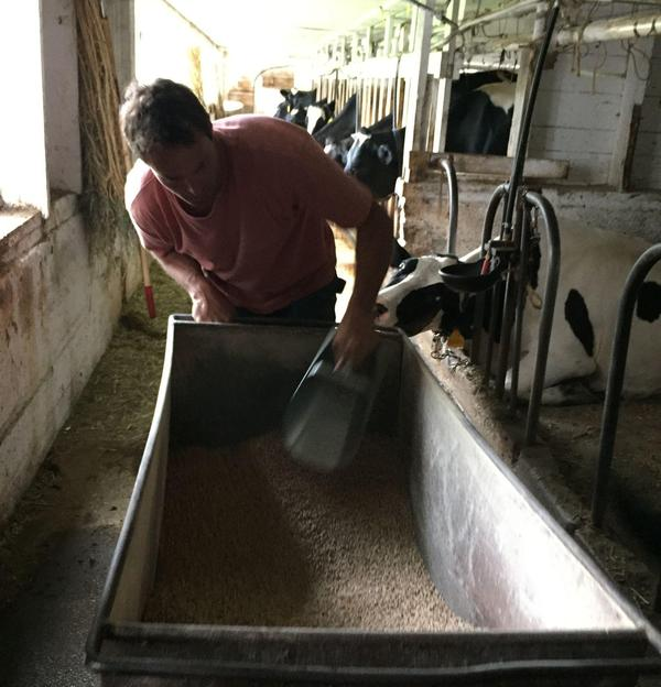 Organic grain for the Silloway farm costs about $600 a ton, about twice as much as conventional feed.