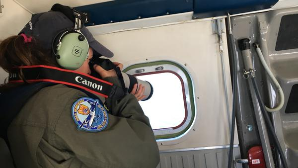 Melanie White takes photos of North Atlantic right whales from NOAA's Twin Otter as the plane circles the whales near Savannah. Whale observers and researchers use the photos to identify the whales.