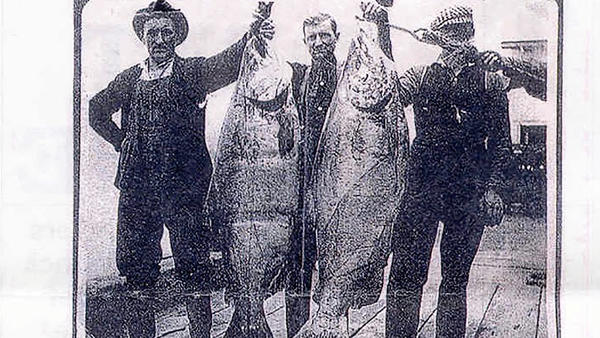 A photo taken in Astoria, Ore., circa 1910. It was stated that the chinook on the left weighed 116 pounds and the one on the right weighed 121 pounds.