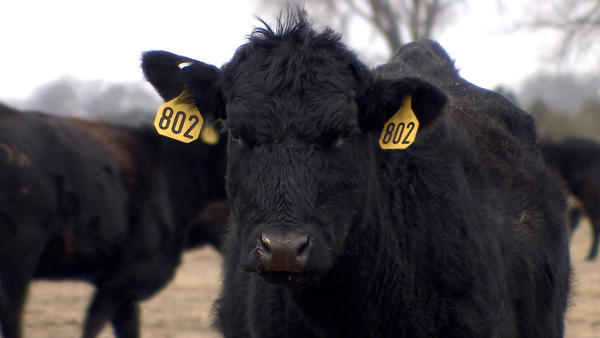 NAFTA allows for free trade of cattle and beef products among the U.S., Canada and Mexico.