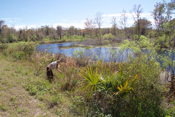 Arthur R. Marshall Loxahatchee National Wildlife Refuge. Jan. 30, 2018.