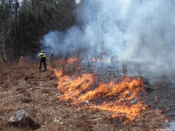 A photo of a previous controlled burn.