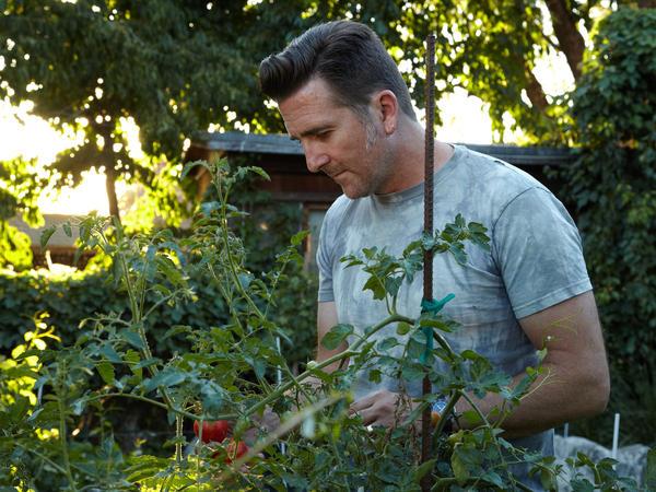 NASA scientist Adam Steltzner checks the tomatoes in his garden.