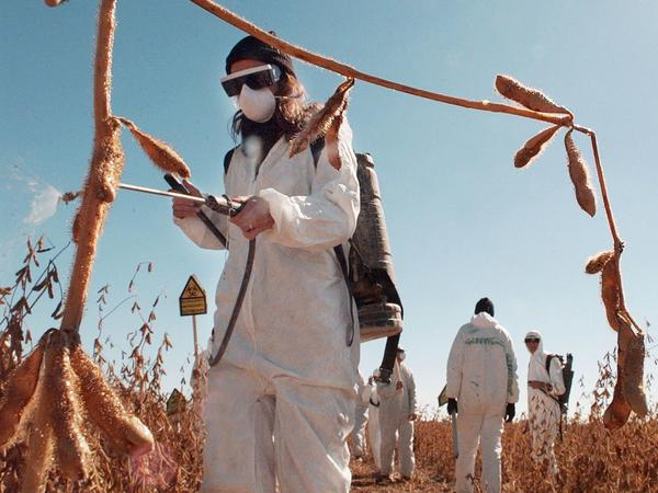 Many folks protest Monsanto's business practices, like this Greenpeace protester spraying paint on a company research soybean field in Iowa.