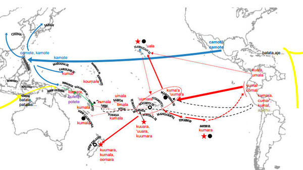 The sweet potato made three independent trips to Southeast Asia. The Polynesians probably introduced it in 1100 A.D. (red). While the Spanish (blue) and Portuguese (yellow) brought other varieties from the Americas around 1500.