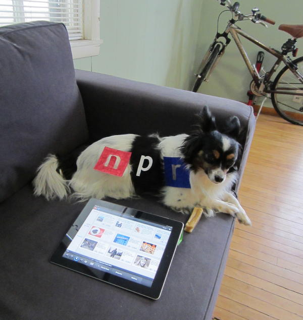 """#2 """"Toby, a Papillon and an avid listener of Wisconsin Public Radio, hails from Madison, WI. He starts his mornings right by listening to<em> Morning Edition</em> on the NPR iPad App, still dressed in his NPR dog pajamas, and chewing his morning bone!"""""""