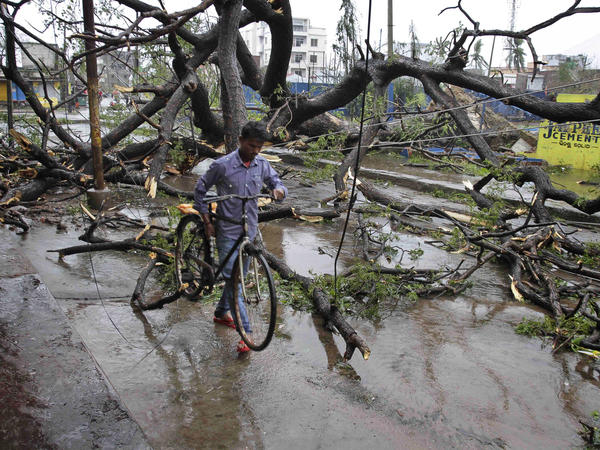 A man makes his way through uprooted trees after Cyclone Phailin hit Berhampur, India, on Sunday.