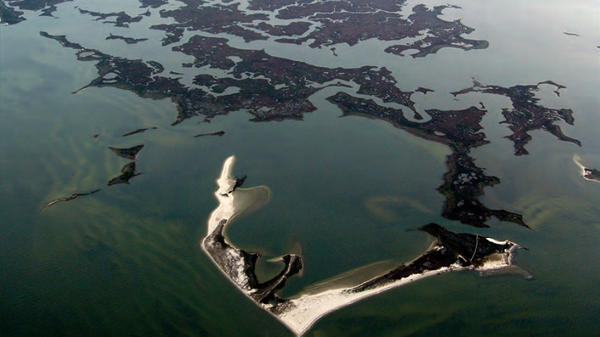 Saltwater wetlands that include marshes and shoals on Virginia's Atlantic coast. U.S. coastal wetlands losses were 25 percent greater from 2004-2009, according to a recent federal study.