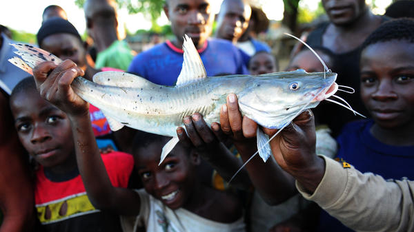 Boys show off their catch on the shoreline of Lake Malawi near Salima in 2012. About the size of New Jersey, Lake Malawi is one of the most biologically diverse lakes in the world.