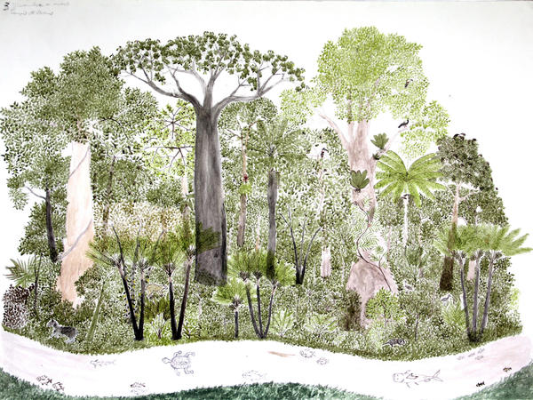 This is one of 12 rain forest landscapes by Abel Rodriguez, part of his ink-and-watercolor series <em>Ciclo anual del bosque de la vega</em> (Seasonal changes in the flooded rain forest).<strong> </strong>