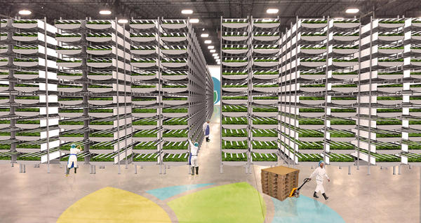 Rendering of future interior growing room at the AeroFarms facility still under construction.