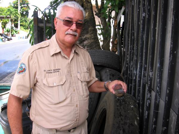 Mosquito larvae fill the cup of stale water that entomologist Luis Hernandez dips from a stack of old tires in a suburb of San Juan, Puerto Rico.
