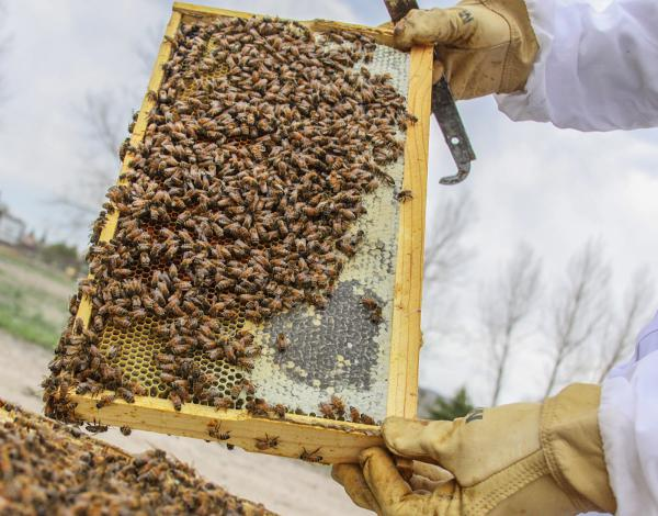 A beehive at Frangiosa Farms, in Parker, Colo. The farm introduced an adopt-a-hive program in 2012. The one-time adoption fees per hive range from $45 to $130 (the latter gets you three jars of honey).