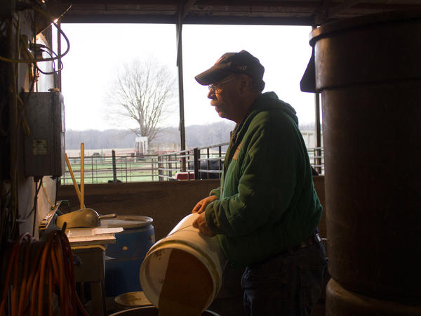Kelly Nissen carefully rations out feed for the cows at the Iowa State University Beef Nutrition Farm.
