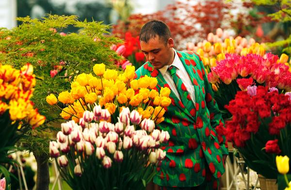 The Chelsea Flower Show has been held nearly every year since 1913 in the Royal Hospital Chelsea grounds.