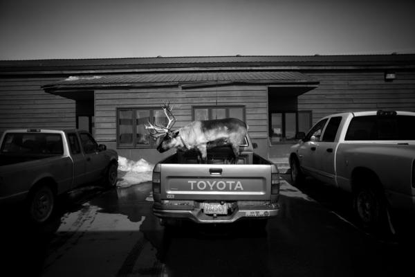 """Velvet Eyes — a pet reindeer belonging to Carl Emmons — stands in the back of a pickup truck outside a market and gas station in Nome, Alaska. <em>From the story """"<a href=""""http://www.npr.org/sections/pictureshow/2013/05/28/186447722/dashing-through-the-snow-with-a-reindeer-in-a-pickup-truck"""" target=""""_blank"""">Dashing Through The Snow ... With A Reindeer In A Pickup Truck</a>,"""" 2013.</em>"""