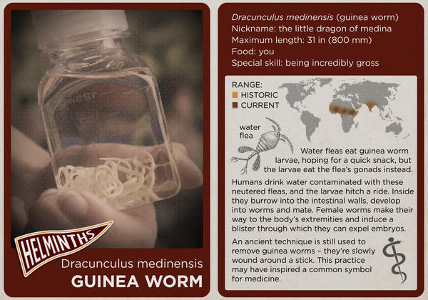 Trading Cards: The Who's Who Of #NPRWormWeek | WCAI
