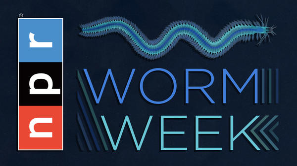 """It may be doubted whether there are many other animals which have played so important a part in the history of the world as these lowly ... creatures."" That's what Charles Darwin said about earthworms. His quote applies to parasitic worms, too. This week Goats and Soda looks at the import of the lowly worm. Follow along at <a href=""http://npr.org/wormweek"">http://npr.org/wormweek</a>."