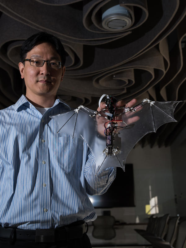 Caltech aerospace professor Soon-Jo Chung holds the 'Bat Bot' flying robot, which mimics the flight patterns of the actual animal.