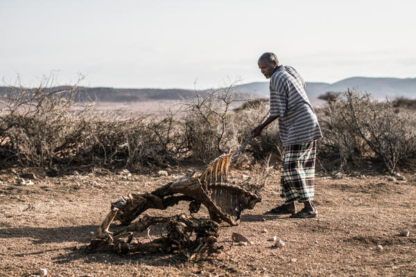 Daud Mohamed, 45, father of nine, moves the bones of one of his cows off the path. Most of his livestock died during the 2016 drought in Somaliland. Several seasons of abnormally low rainfall have left millions in the Horn of Africa in need of food aid, according to the U.N.