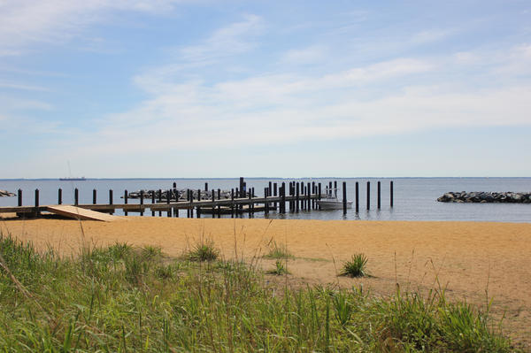 "The beach at the Chesapeake Bay Foundation headquarters in Annapolis, Md. ""You give nature half a chance and she will produce every single time,"" says Will Baker, the nonprofit's president."
