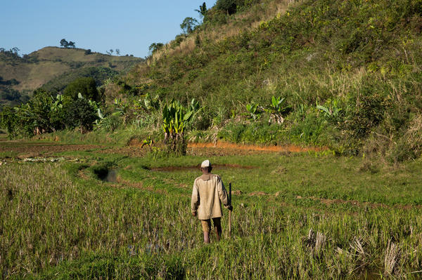 Marolahy says he plans to slash and burn a nearby hillside to expand his small farm, in part because rice production is less reliable than it used to be.