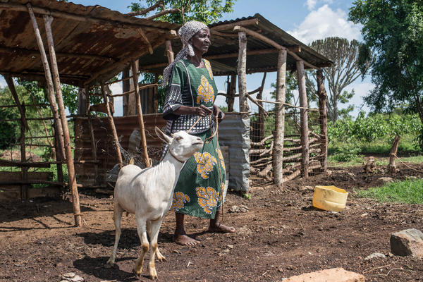 Mary Abagi used her payout from a merry-go-round savings club to buy a goat. People in her village have turned to the clubs as a way to save after a charity began providing them with small monthly cash payments.