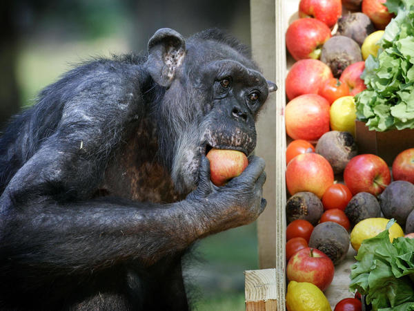 Mama celebrates her 50th birthday on May 3, 2007, with fruit and vegetables at the Burgers Zoo in Arnhem, Holland.