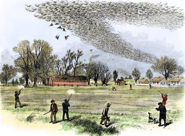 The artwork titled <em>Shooting Wild Pigeons in Northern Louisiana</em> is based on a sketch by Smith Bennett and appeared in the <em>Illustrated Sporting and Dramatic News</em> of July 3, 1875.