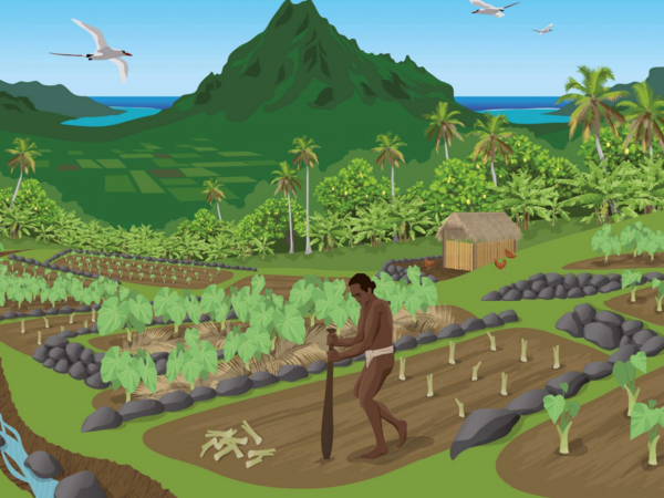 This image on a panel along the Archaeological Nature Trail in the 'Opunohu Valley on the island Mo'orea shows a taro farmer at work.
