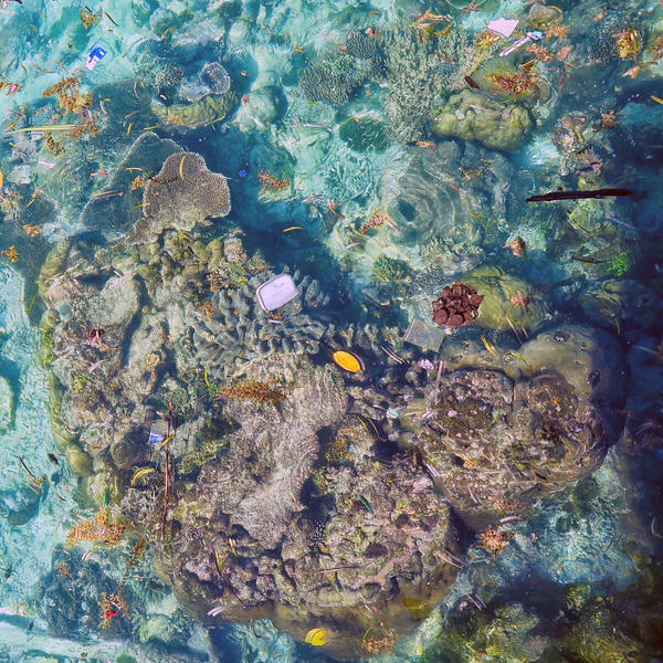 A survey of 150 reefs found plastic was a common pollutant.