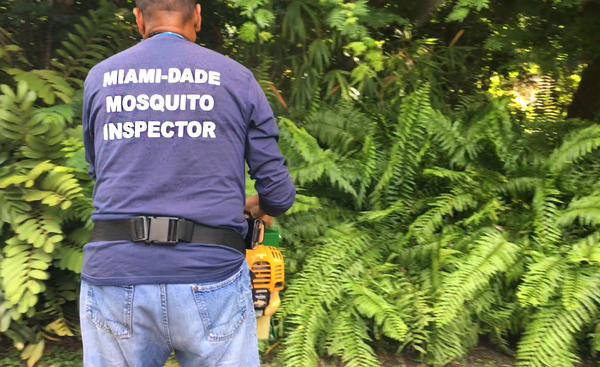 When Zika struck Miami, pest control workers sprayed insecticide to keep the aedes aegypti mosquitoes at bay.