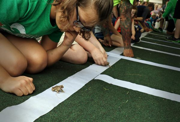 Addison Choate of Conway, 10, contemplates her strategy ahead of the short toad race to the finish line.