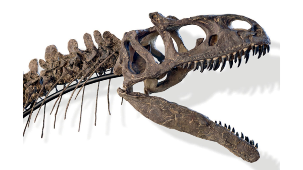 The fossilized skeleton of a carnivorous dinosaur, excavated on private property in Wyoming, sold for more than $2 million at an auction in Paris.