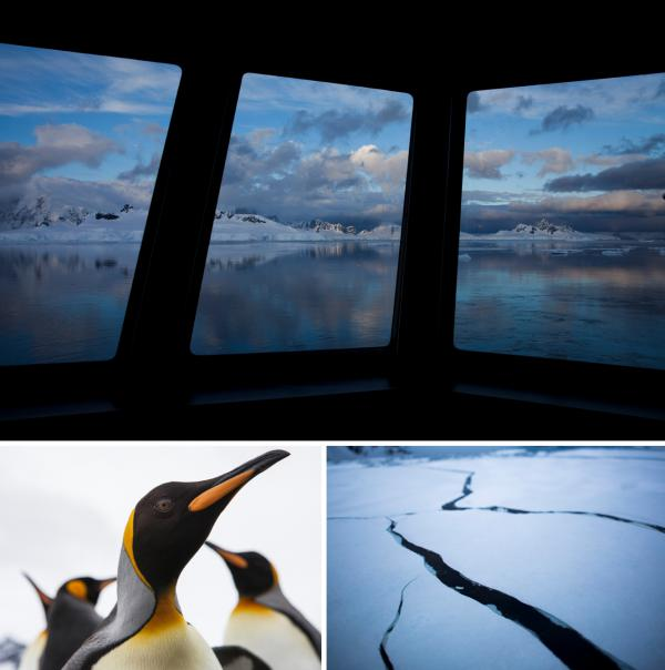 Top: From the National Geographic Explorer ship, a view of Wilhelmina Bay as the sun starts to brighten the sky. Left: Curious king penguins waddle over — some close enough to peck at camera lenses — at St. Andrews Bay on South Georgia island. Right: Long black ribbons of cracks extend from the bow of the ship as it moves through the sea ice.