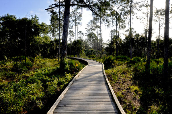 The Withlacoochee Gulf Preserve offers some of the best places in the world to see the effects of sea-level rise and climate change, according to scientists working in the area.
