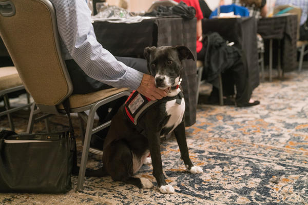 Dixie is a PTSD support dog. Registry programs for service dogs hope to expand to all members of the service dog community.