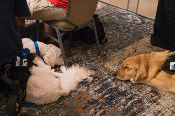 Service dogs rest during a panel discussion at the Association of Service Dog Providers for Military Veterans annual conference.