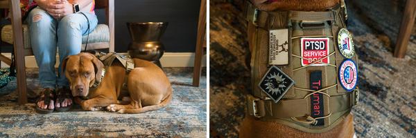 Service Dog Registries To Streamline Travel For Veterans