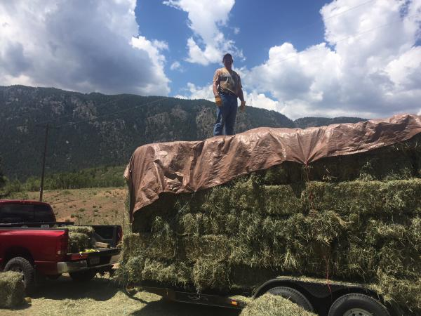 Loading up a customer's trailer at Colorado Horse Hay
