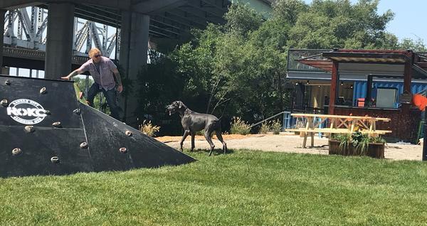 RoKC Climbing Gym built a climbing wall for dogs at the new Bar K Dog Park near Berkley Riverfront Park.