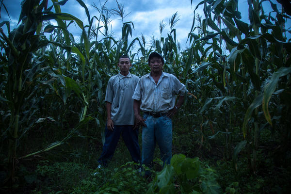 "Tavo, right, and his son Moises in the maize plot by their house. Ayuso heard Tavo tell his son to flee the country, explaining: ""Honduras stopped caring about its people and started eating its young."" With storms brewing above,<strong> </strong>Tavo then clasped his hands and said, ""I beg you God, have mercy on my boy."""