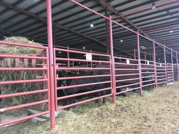 Cattle that'll be sold wait in pens at the Joplin Regional Stockyards in July 2018.