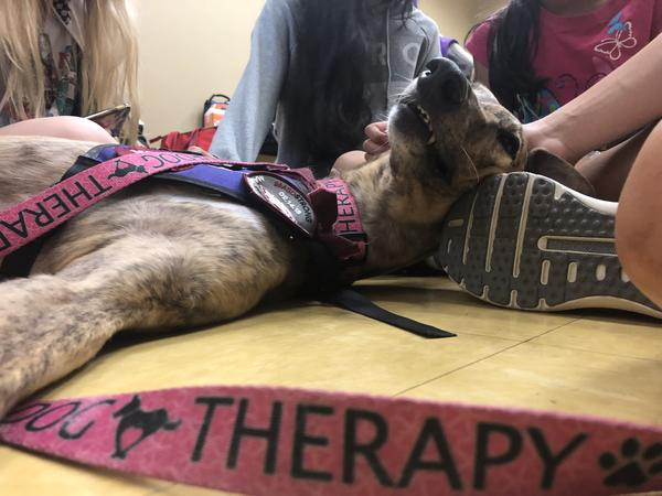 Lulu, a three-legged greyhound, lays on the floor at the Parkland rec center during a Therapy Dog Thursday event this summer, surrounded by Marjory Stoneman Douglas High School students.