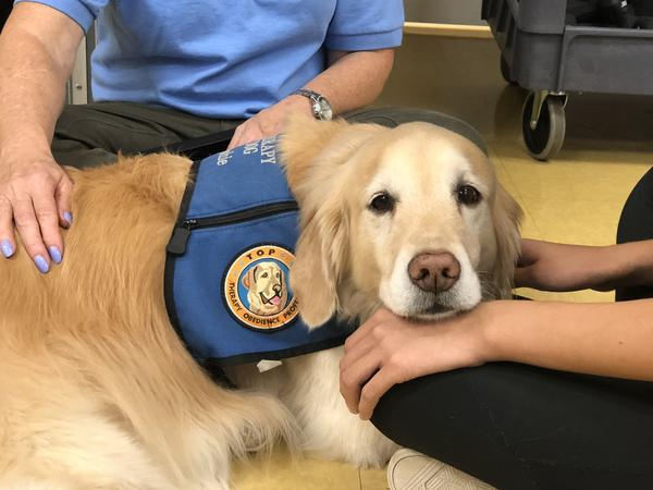 Therapy dog Sophie rests her head on the hand of a recent Marjory Stoneman Douglas High School graduate during a Therapy Dog Thursday event over the summer.