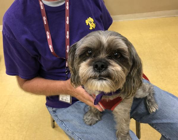 Therapy dog Annie, a mix between a Yorkie and a Shih Tzu, is one of the reasons many Douglas students felt they could return to school after the Feb. 14 shooting.