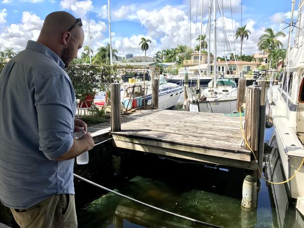 Adam Weinstein surveys the green algal blooms by the dock behind his house Friday. He said it looks much thicker after Tropical Storm Gordon passed through last weekend.