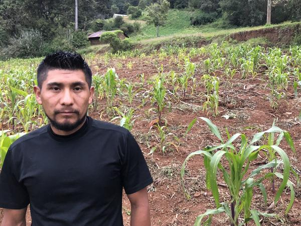 Guatemalan farmer Oscar Lopez stands next to his corn crop. Stunted by drought, the corn should be as high as Lopez. If he loses his crop, he will lose his income.