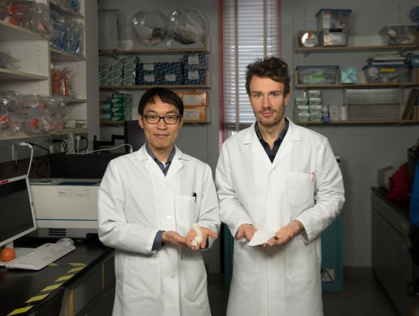 Graduate research scientists Seungkuk Ahn (left) and Christophe Chantre (right) hold nanofiber scaffolds in their lab at Harvard. Their goal is to develop an inexpensive material that can close big wounds with little scarring.
